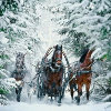 Three horses in the winter forest